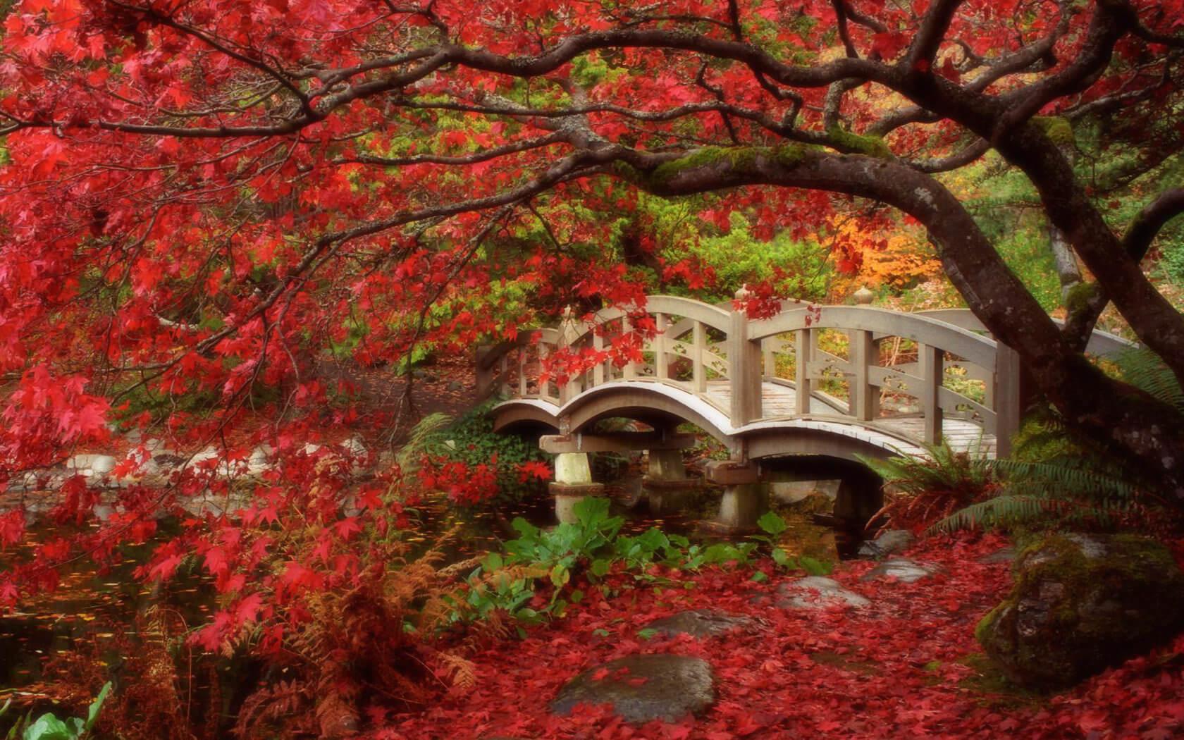 جمال الحديقة اليابانية في اسطنبول