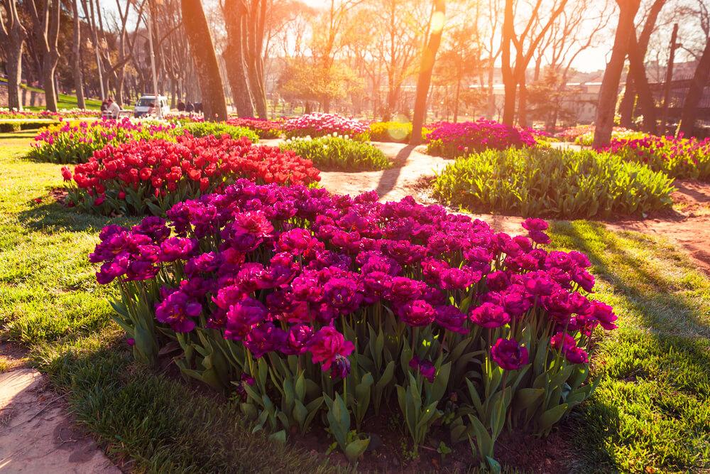 حديقة دولهانة