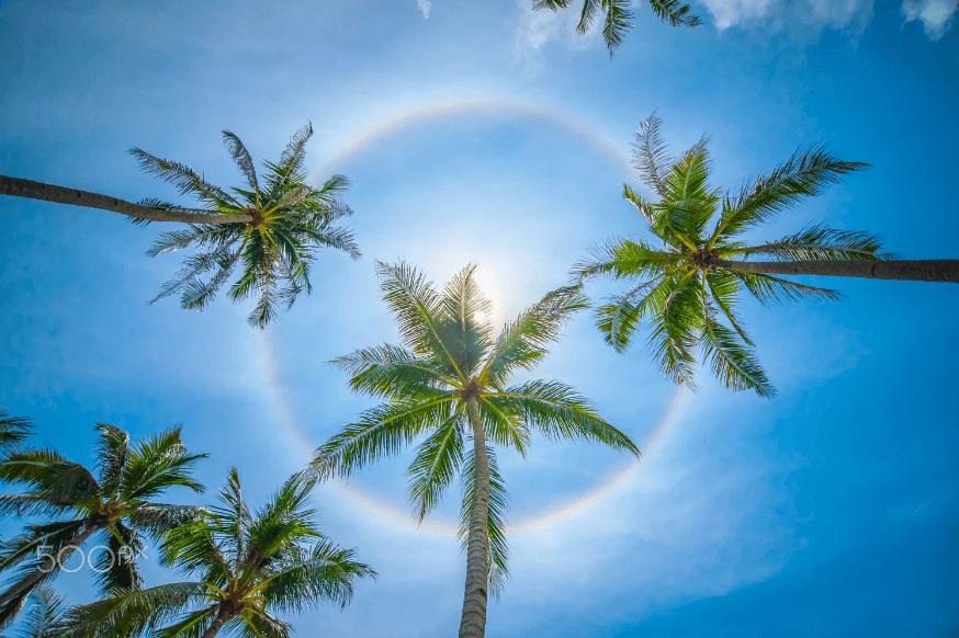 الشاطئ الشمسي